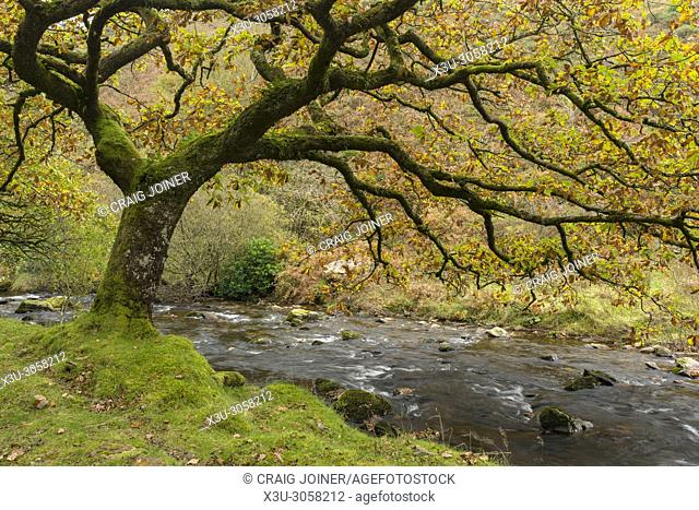 Badgworthy Water in the Doone Valley in Autumn on the Devon and Somerset boarder in Exmoor National Park, England