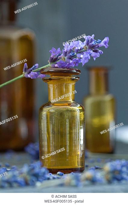 Twig of lavender on top of brown glass bottle