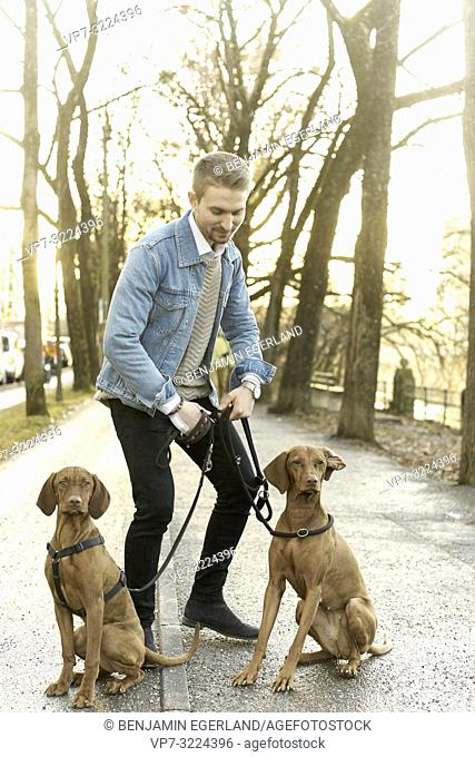 man with dogs on leash in city, in Munich, Germany