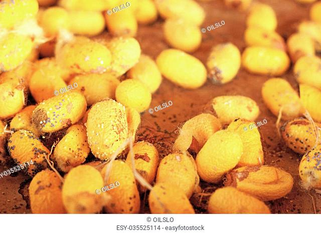 a lot of yellow cocoon silkworm
