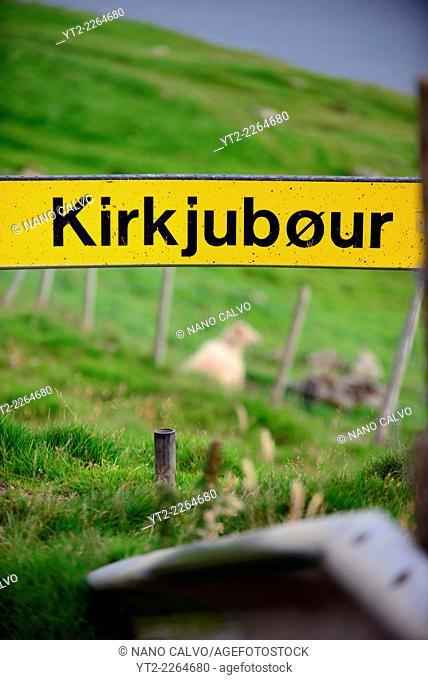 Sheep and name sign in Kirkjubøur, Faroe Islands