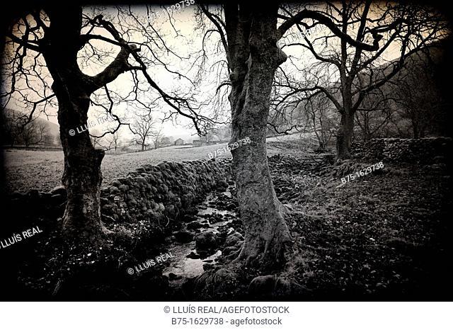 Paisaje con arboles en North Yorkshire, Yorkshire, England, UK, Landscape with trees in North Yorkshire, Yorkshire, England, UK