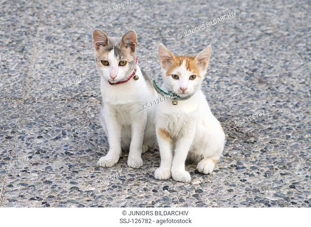 2 young cats - sitting