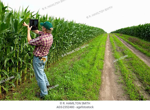 Agriculture - A young farmer in a mid growth grain corn field records his crop using his Apple iPad camera. This represents the next generation of young farmers...