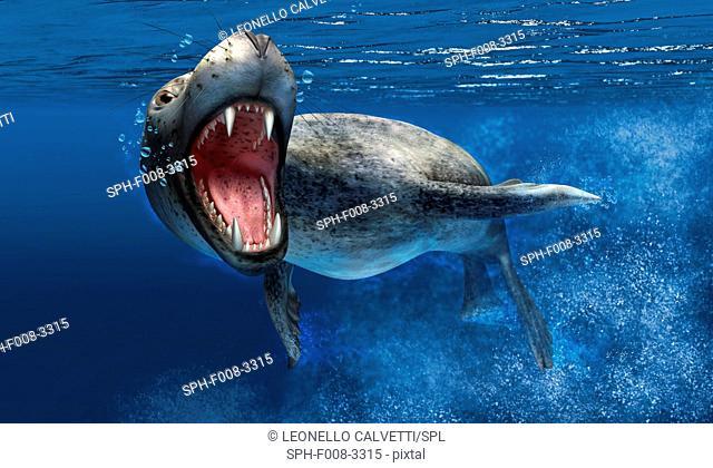 Leopard seal, artwork