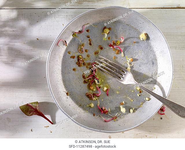 An empty salad plate