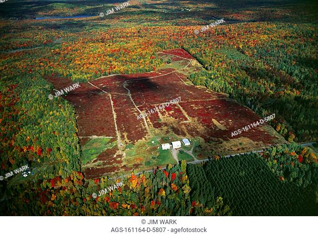 Agriculture - Aerial view of a lowbush blueberry field barrens in Autumn / ME - nr. Kingsbury