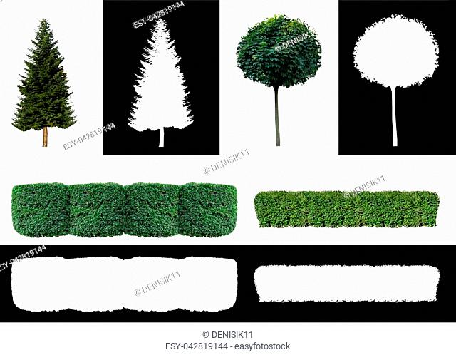 Set of different ornamental plants for a garden or a landscape park with