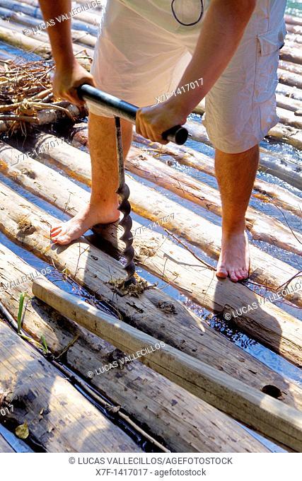 ferryman almadiero or raier making a raft rai or almadia  La Pobla de Segur  Diada dels Raiers ferrymen feast day  Noguera Pallaresa river  Pyrénées  Lleida...