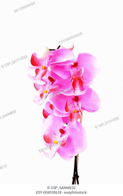 Pink silk orchid flower in closeup