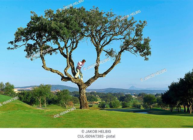 Golfer standing in tree preparing to take golf swing