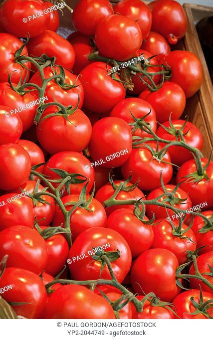 Fresh tomatoes for sale at Mercado de San Miguel - Plaza San Miguel, Los Austrias, Madrid, Community of Madrid, Spain