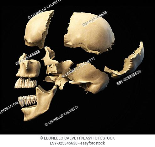 Human skull with parts exploded. Side view, on black background. Clipping path included