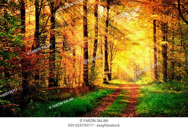autumn forest scenery with rays of light illumining the hot gold foliage and a footpath leading into the scene