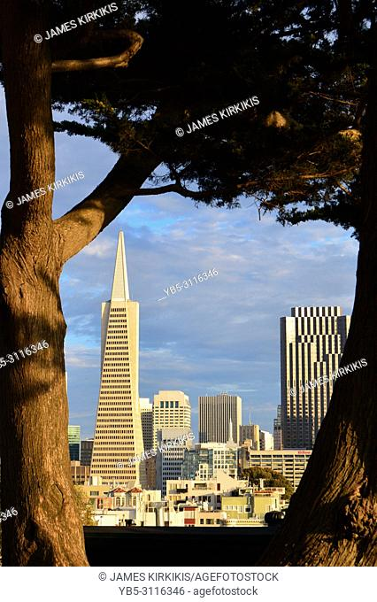 The San Francisco skyline is framed by a tree