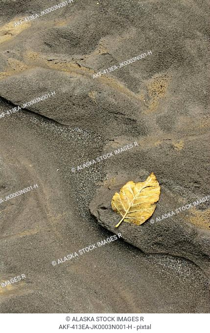 A lone leaf rests in the sand along the Alatna River in Gates of the Arctic National Park and Preserve, Arctic Alaska, Summer