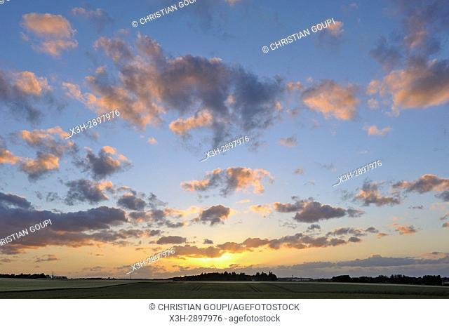 cereal field at sunset, Centre-Val de Loire region, France, Europe