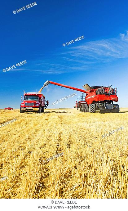 a combine harvester augers spring wheat into a farm truck during the harvest, near Dugald, Manitoba, Canada