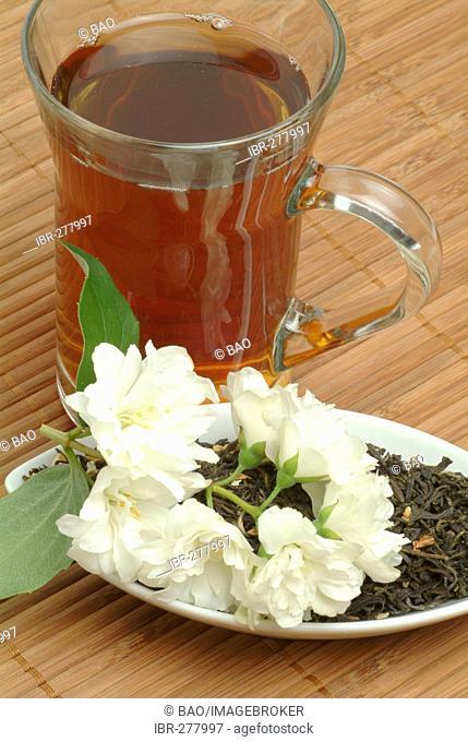 Jasmine tea, Jessaminetea, medicinal tea, black tea with Jasmine, Gelsemium sempervirens, Jasminum officinale