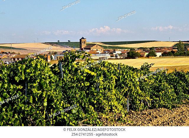 La Seca, verdejo grape wine cradle, Valladolid, Castille and Leon, Spain