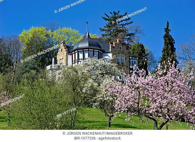 Almond tree blossom with Villa Emilienruhe mansion, Bad Bergzabern, Deutsche Weinstrasse, German Wine Road, Pfalz, Rhineland-Palatinate, Germany, Europe
