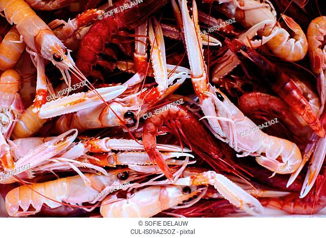 Traditional Italian food, overhead view of fresh prawns, Campania, Italy