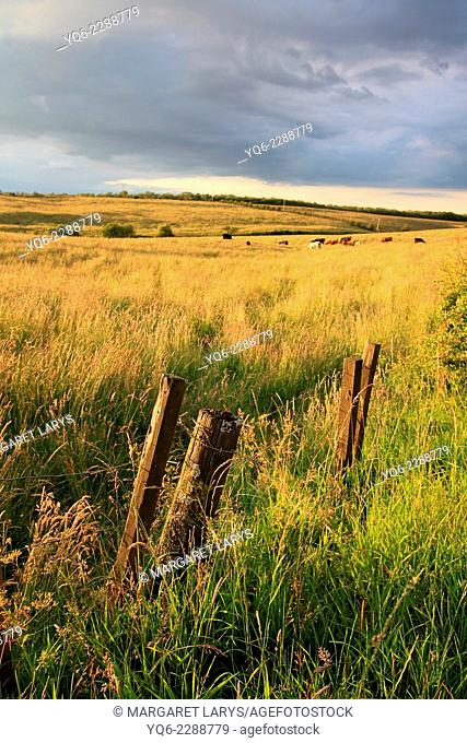 Beautiful summer fields in golden sunlight with wooden fence
