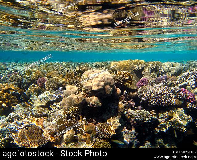 Below the surface with the reflection of a coral reef