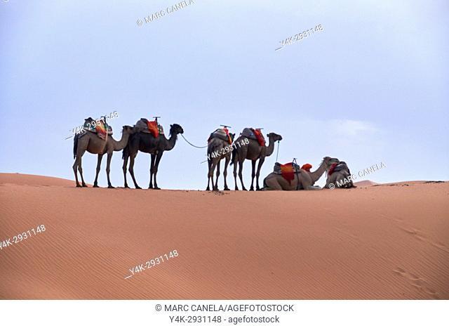 Africa, Morocco desert of merzouga