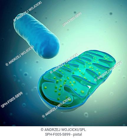 Mitochondria, computer artwork