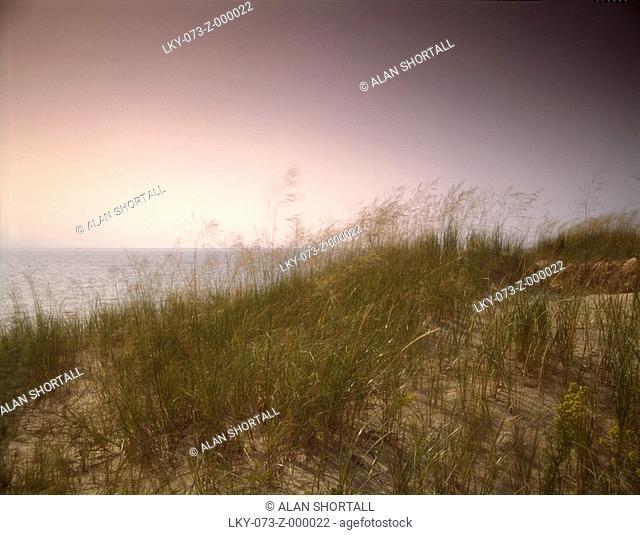 Long grass near beach