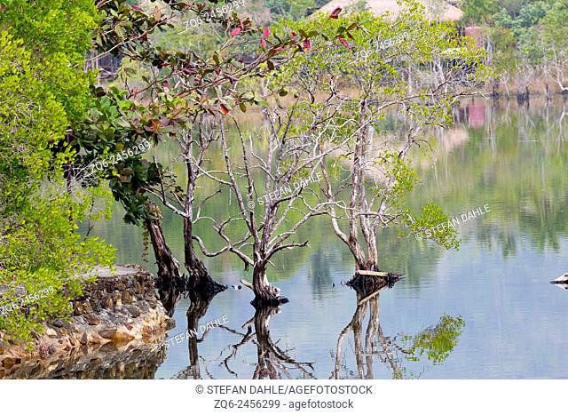 Mangroves in the Village Klong Kloi on Ko Chang, Thailand