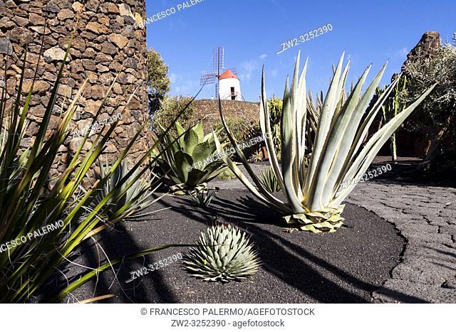 The cactus garden project of César Manrique. Guatiza, Lanzarote. Spagna