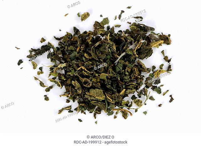 Nettle, dried, Urtica dioica, cut out, object