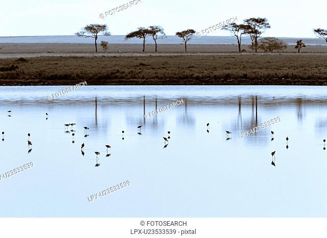 wader, Africa, Central, Lake Masek, National Park, Ndutu, Ngorogoro Conservation Area