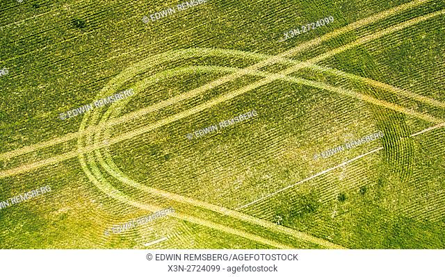 Aerial view of sprayer tracks in a cover crop field
