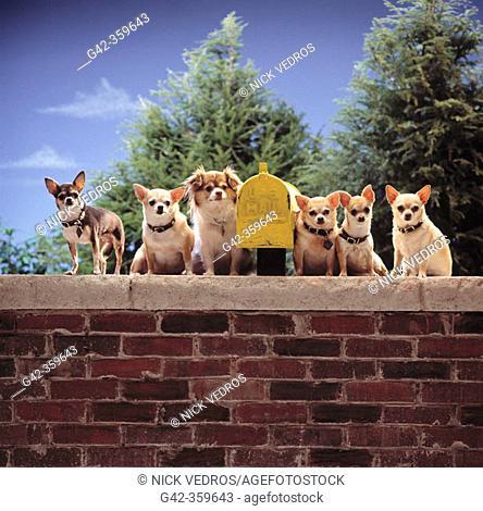 Chihuahas guarding mailbox