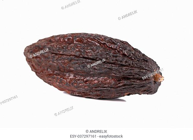 cocoa fruit on a white background