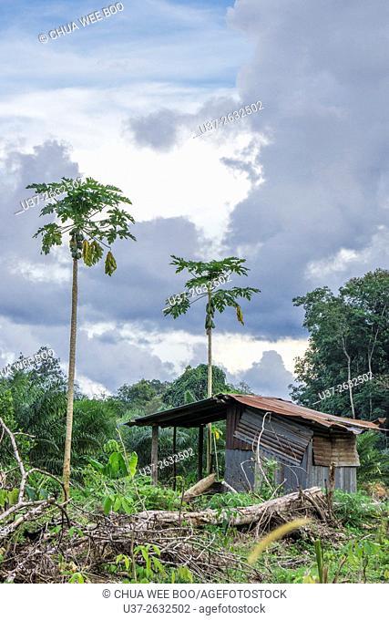 A Bidayuh house at Biawak, Sematan, Malaysia