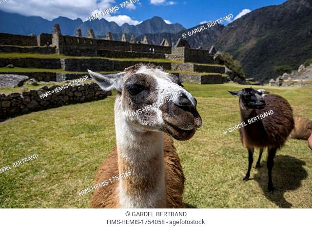 Peru, Cuzco Province, the Sacred Valley of the Incas, Inca archaeological site of Machu Picchu, listed as World Heritage by UNESCO
