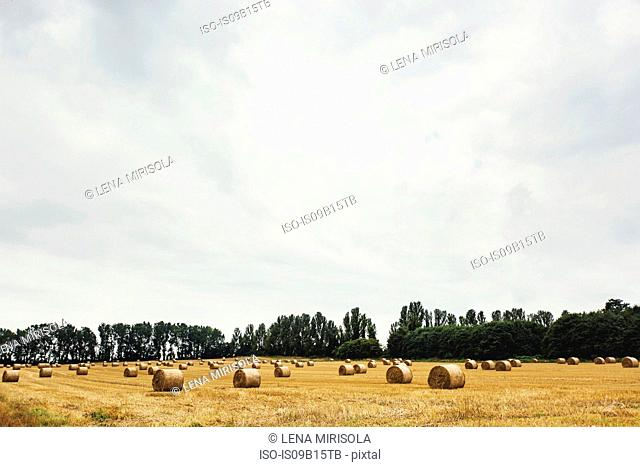 Field with bales of straw, Gillingham, Kent, England