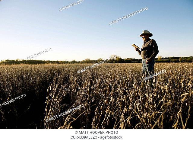 Senior male farmer using digital tablet in soybean field, Plattsburg, Missouri, USA