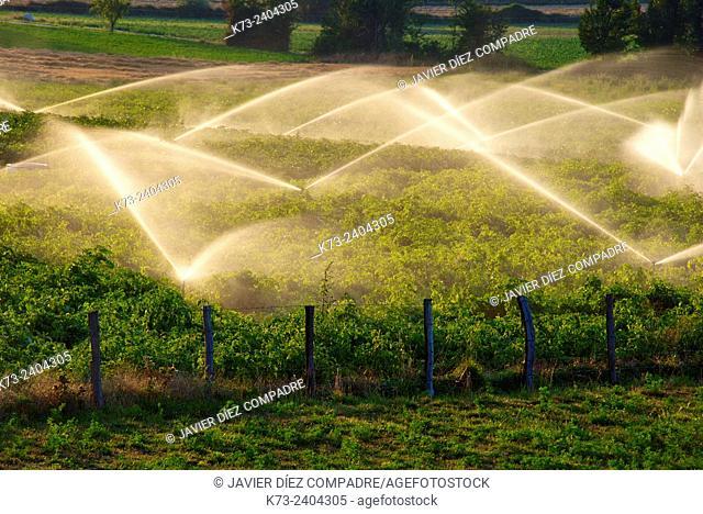 Sprinklers. San Martin de Elines. Valderredible. Cantabria. Spain