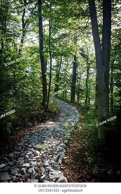 Woodland path, Pecina Megara near Tarcin, Bosnia and Herzegovina