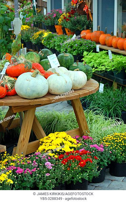 Autumn flowers and squash are for sale at a roadside farm in Lancaster County, Pennsylvania
