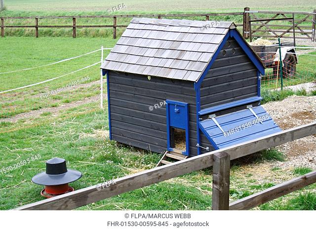 Domestic Chicken, coop and feeder in paddock on smallholding, Bacton, Suffolk, England, september