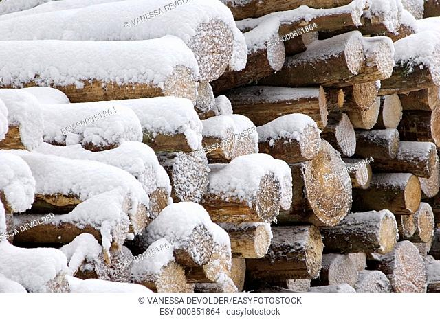 Logs of wood covered with snow  Location: France, Vosges