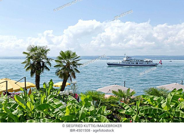 Pleasure boat on Lake Constance, palm trees on the waterfront, Meersburg, Baden-Württemberg, Germany