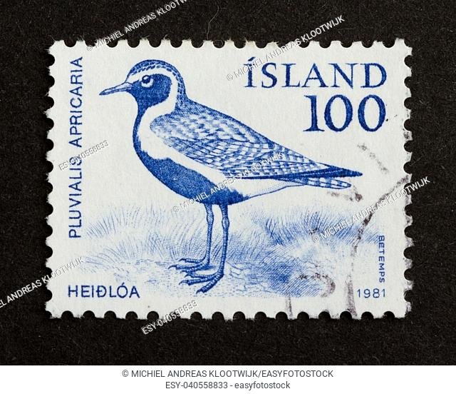 ICELAND - 1981: Stamp printed in Iceland shows a golden plover, 1981