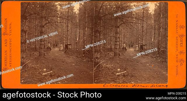 Cathedral Woods, North Conway, N.H. Additional title: American and Foreign Stereoscopic Views. H. Ropes & Co. (Publisher). Robert N